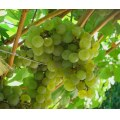 11/13