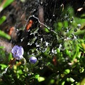 macro nature plants spiderweb dew drops water