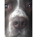 'Rigsby' wanting a close up