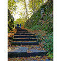 steps stone moss stairs rock trees fallcolour