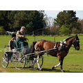 dressage carriage driving horse event Scotland