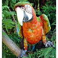 macaw parrot bird nature