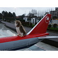 owl airplane plane aircraft