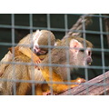 ANIMALS monkeys