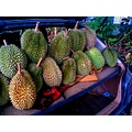 durians tropical fruits thorns green delicious