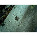 footprint pawprint ipsley worcestershire frost