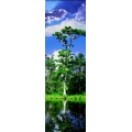 Tree scenery landscape water sky