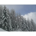 Snow White Ski Skiing snowing trees ice france