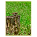 nature garden green grass log bird closeup ultrazoom teleconverter