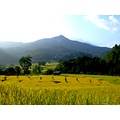 Back to Chiengmai. (last series) 1/7 There are some shots from work left and I'd love to share....