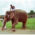 india kanchipuram animal elephant indix kancx animx elepx