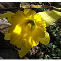 Daffodil spring easter yellow flower nature