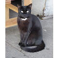cat sidewalkcat nyc blackcat