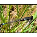 insect damselfly