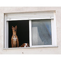 dogs look out guard