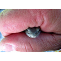 Say hello to my little friend...  This is an eastern gray tree frog, which fell off of the roof...