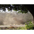 animal horse paddock dust morning sunlight beverly bb littleollie