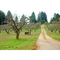 california bonny doon spring apple orchard