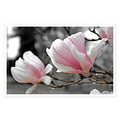 Magnolia flower fine art botanical nature