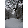 Skipton Woods Snow