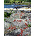 rock carvings namforsen angermanland sweden river
