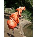 Nature Wildlife Exotic Animals Zoo Birds Flamongo Pink