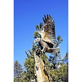 roncarlin woodcarvings idyllwild CA