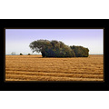 denmark landscape tree golden hay lines ship sail wind field scenery