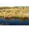 Sinclair Wetlands - Approximately 50kms south of Dunedin.