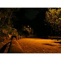 path wood night light