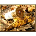 cartridgee riffle hunting autumn France macro leaves nature