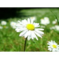 I see you guys like macro of daisys this is mine :)