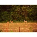 Deer wildlife Illinois Midwest