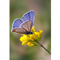 butterfly closeup macro nature insect flower nikon sigma