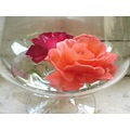 Roses in a bowl.