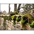moss ardennes france