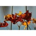 shutterlyspectacularphotography fallcolors