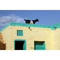 Goat on the roof in Rajasthani village