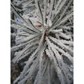 close up frosty super macro