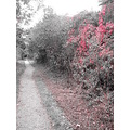 colouraccent accent red bw monochrome country oldrailway prestatyn