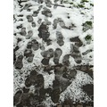 footsteps snow ice direction path melting