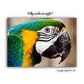 parrot colours feathers beak bird