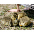 goslings river cherwell oxford