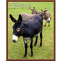 donkeys animals