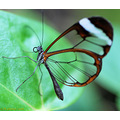 butterfly insect wings macro nature