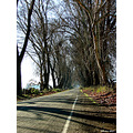 winter paths roads landscape trees chile