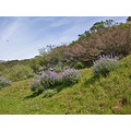 sibleyfph spring wildflowers path lupines lupins sky clouds
