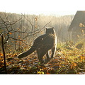 cat sun autumn