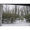 one day's snow in my backyard - gone in one day