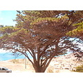 PortoSanto island Madeira Portugal 2007 holiday mountains dry view tree